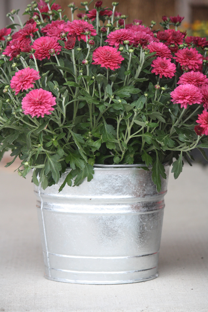 Galvanized Containers For Gardening | Bucket Outlet