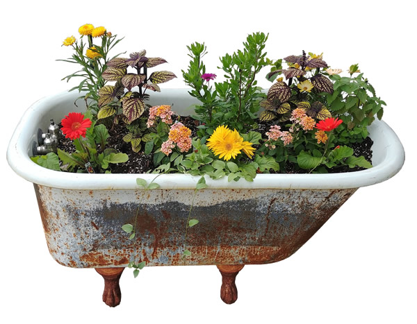 rustic tub planter