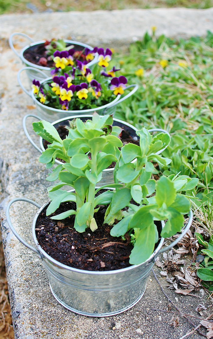 Galvanized Containers For Gardening Bucket Outlet