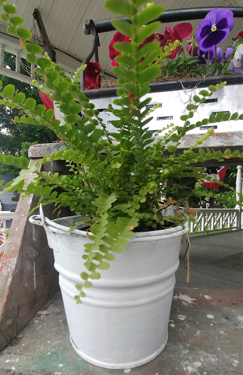 white metal bucket rustic planter
